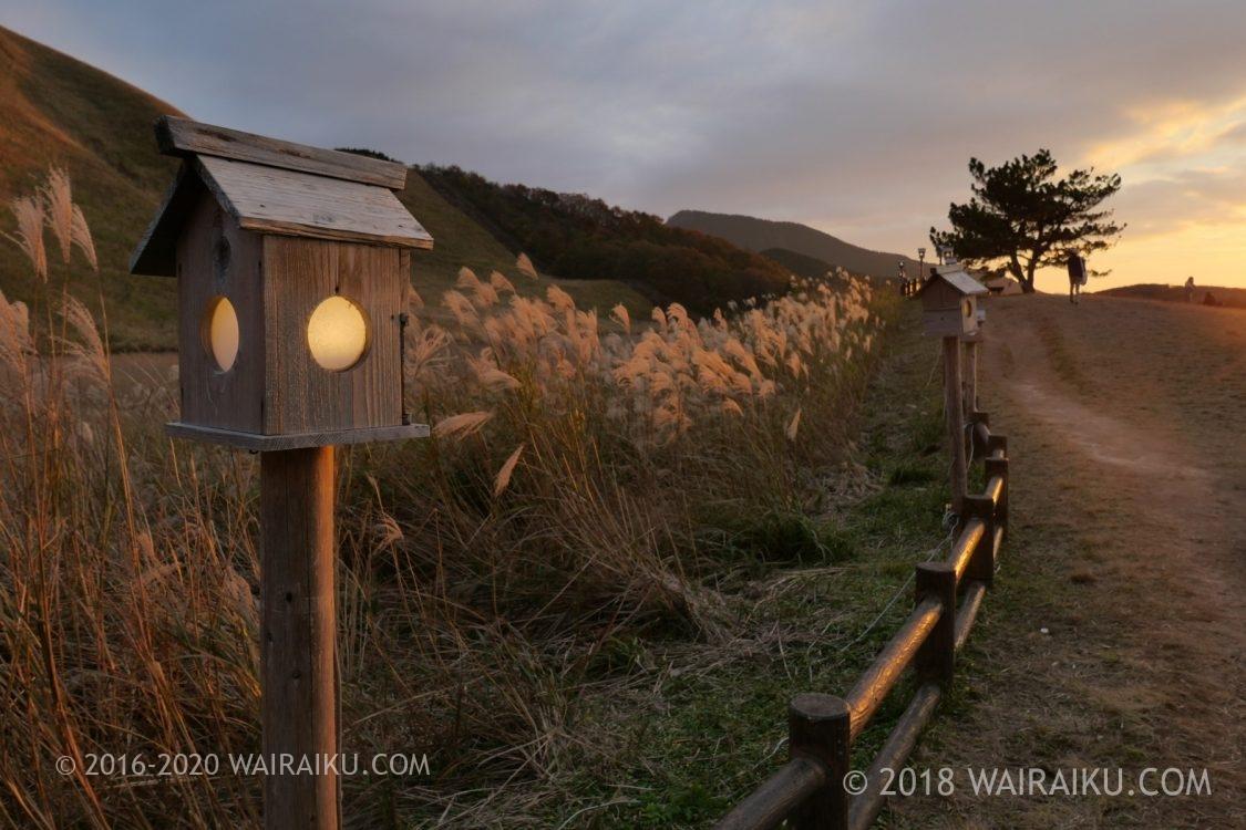 すすきが黄金色に輝く曽爾高原を犬連れ散歩|奈良県宇陀郡