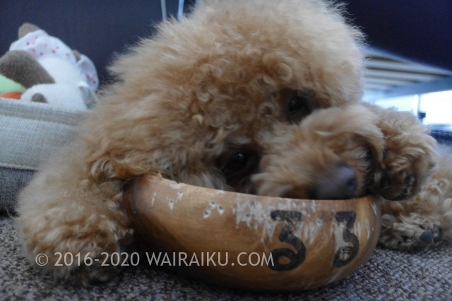 犬用ふりかけでドッグフードを食べない犬のわがままを克服!?