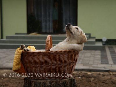 dogtherapyjapan
