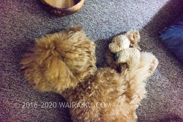 犬におもちゃのプレゼント!「プラッツ・プードルコレクション」