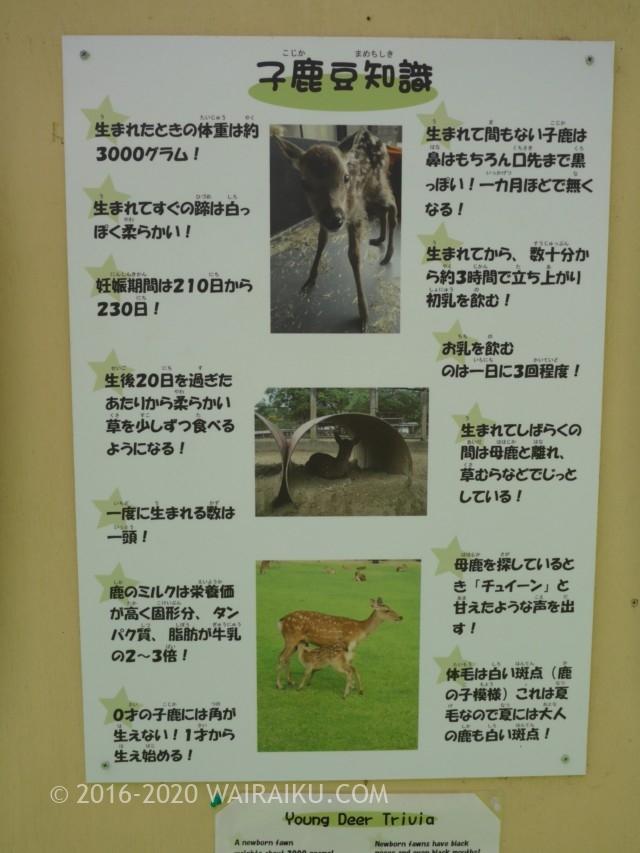 鹿苑の子鹿公開には望遠のカメラをもっていきましょう。