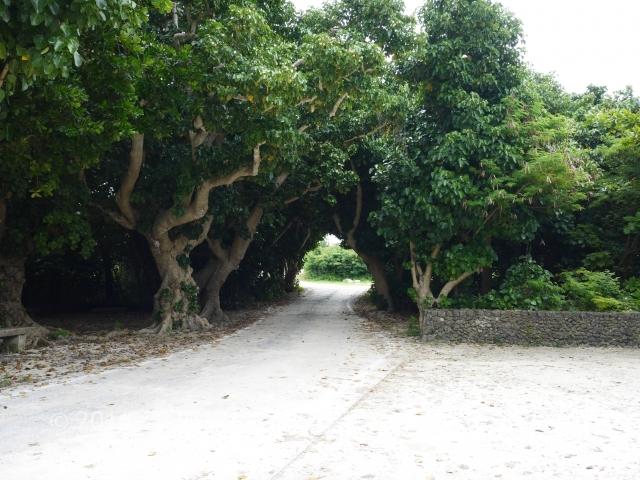 コンドイビーチ(やど家たけのこ宿泊レビュー。梅雨の竹富島をのんびり観光。)