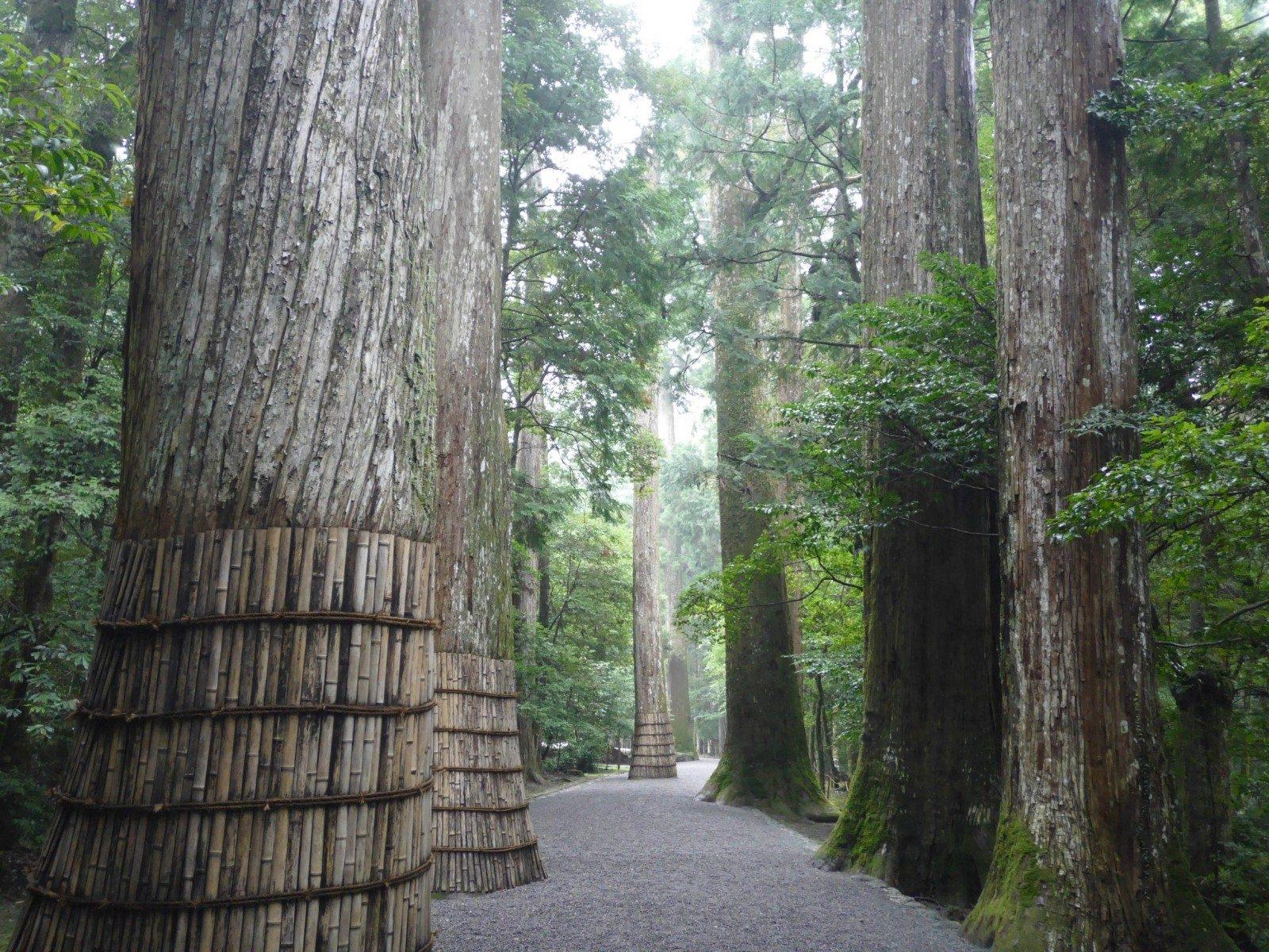 【ゼロ磁場】雨上がりの瀧原宮は幻想的なパワーを感じるスポット。