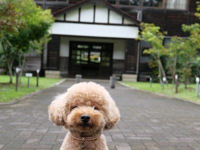 奈良カエデの郷ひらら 犬連れ