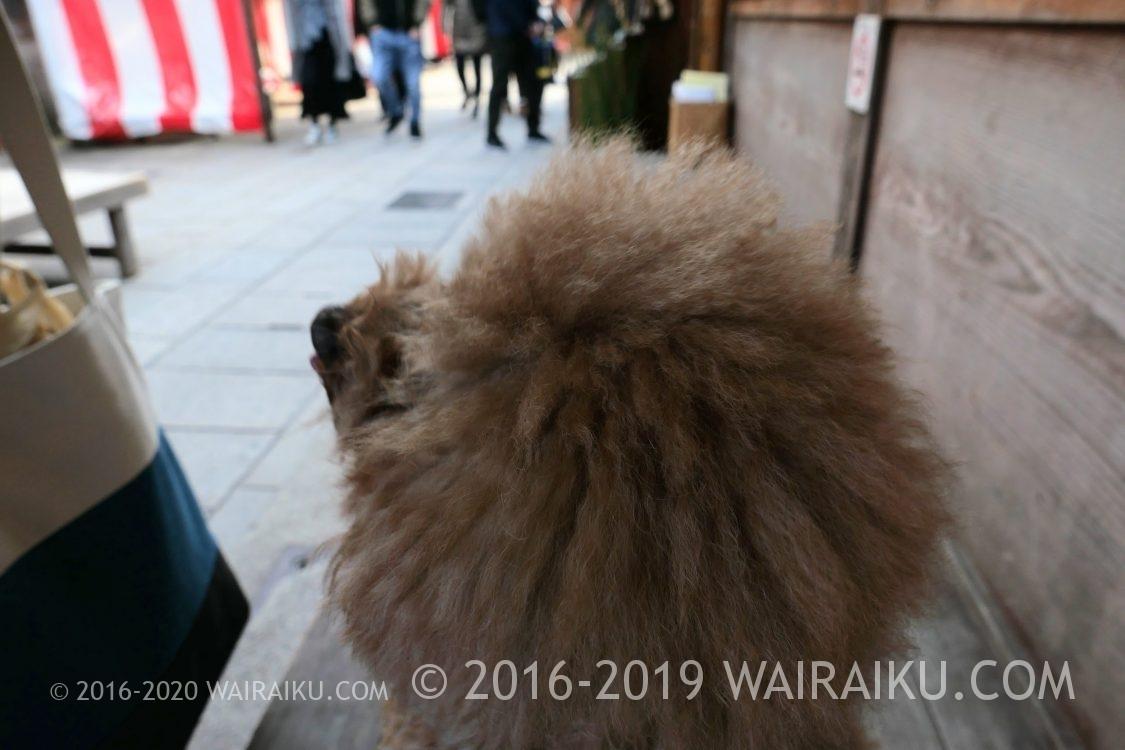 伊勢神宮は犬と一緒に参拝できません。衛士見張所に預けてみたよ。