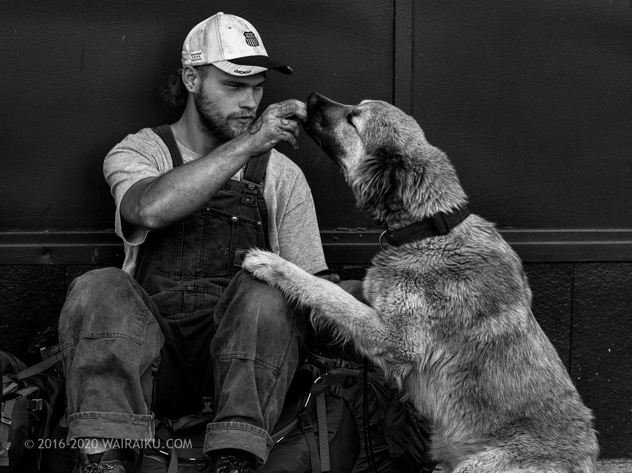 ホームレスと犬