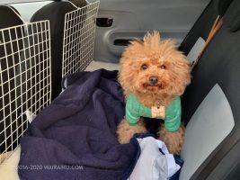 犬 ドライブシート スペースボード 自作
