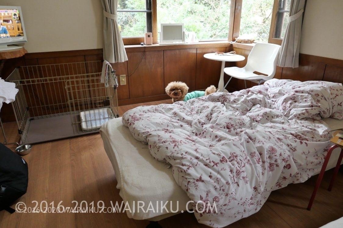 犬と泊まれる伊豆の宿 ハッピーちっぴー