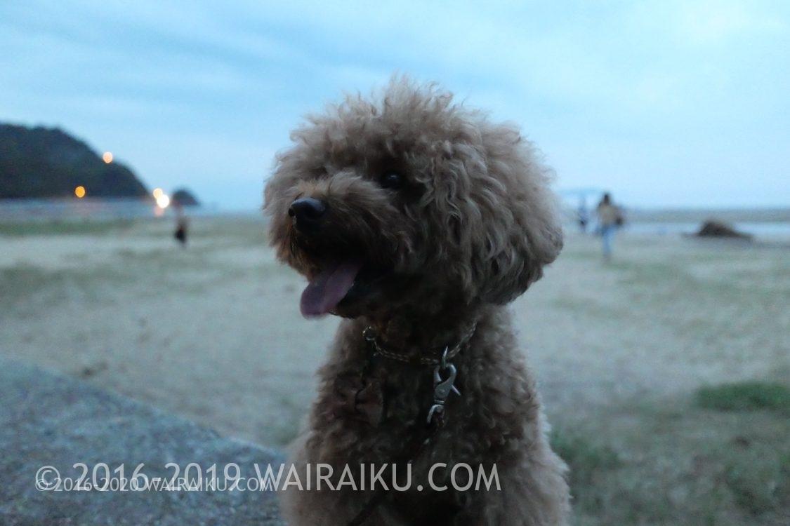 父母ヶ浜 犬