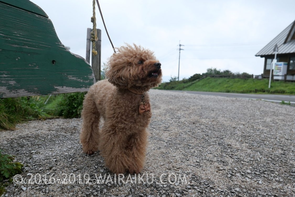 四国カルスト 犬連れ