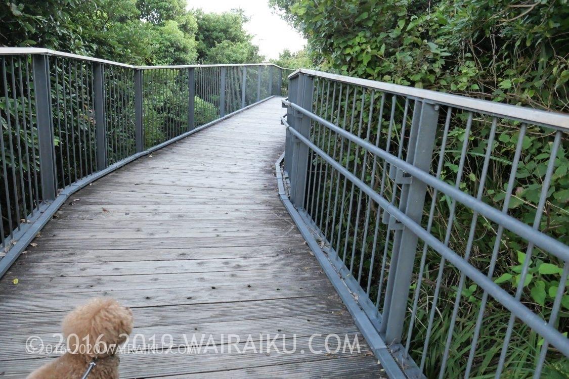 横山展望台 スロープ