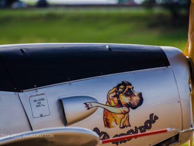犬と飛行機