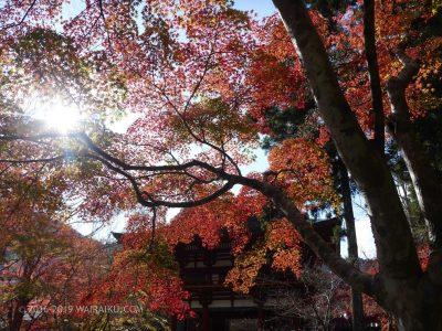 室生寺 紅葉