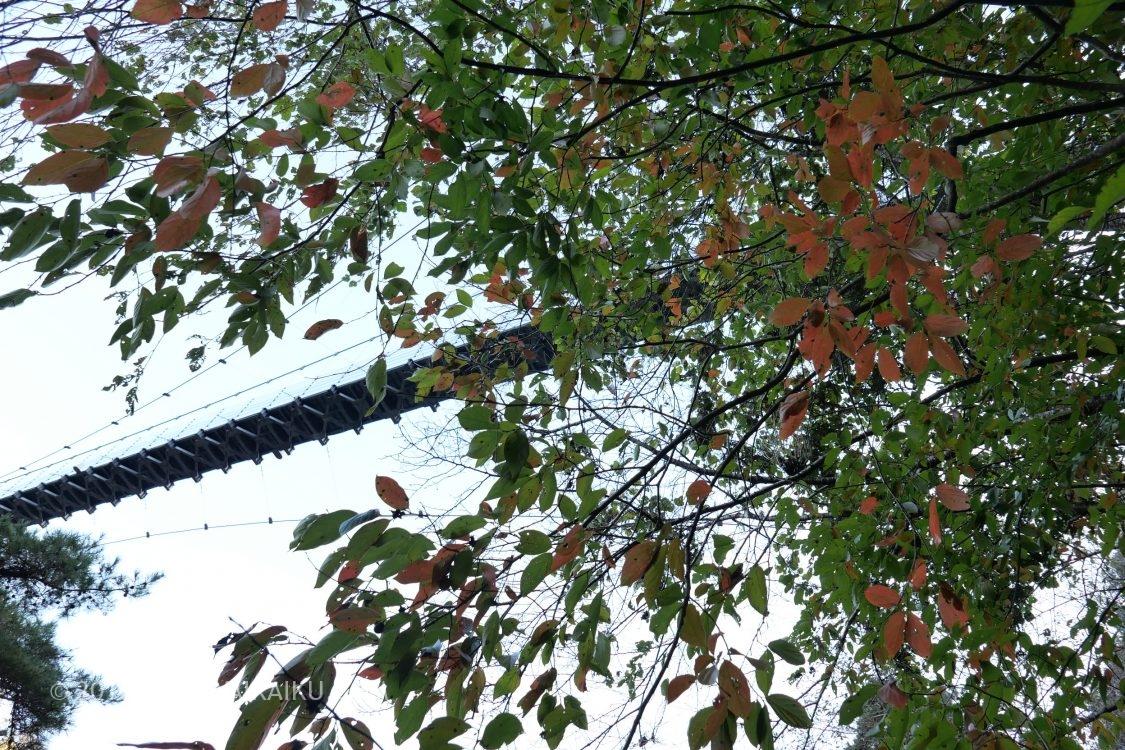 岩倉峡公園 紅葉