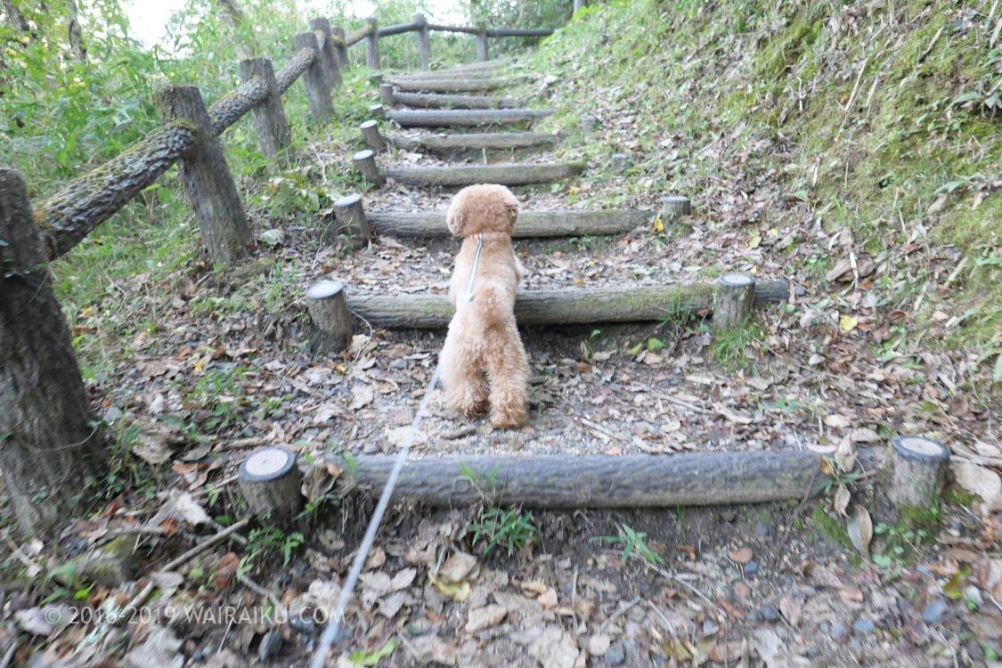 岩倉峡公園 犬連れ