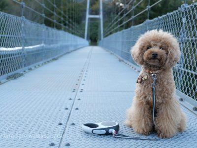 岩倉峡公園 吊り橋 犬連れ