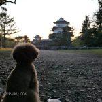 伊賀上野城 犬連れ