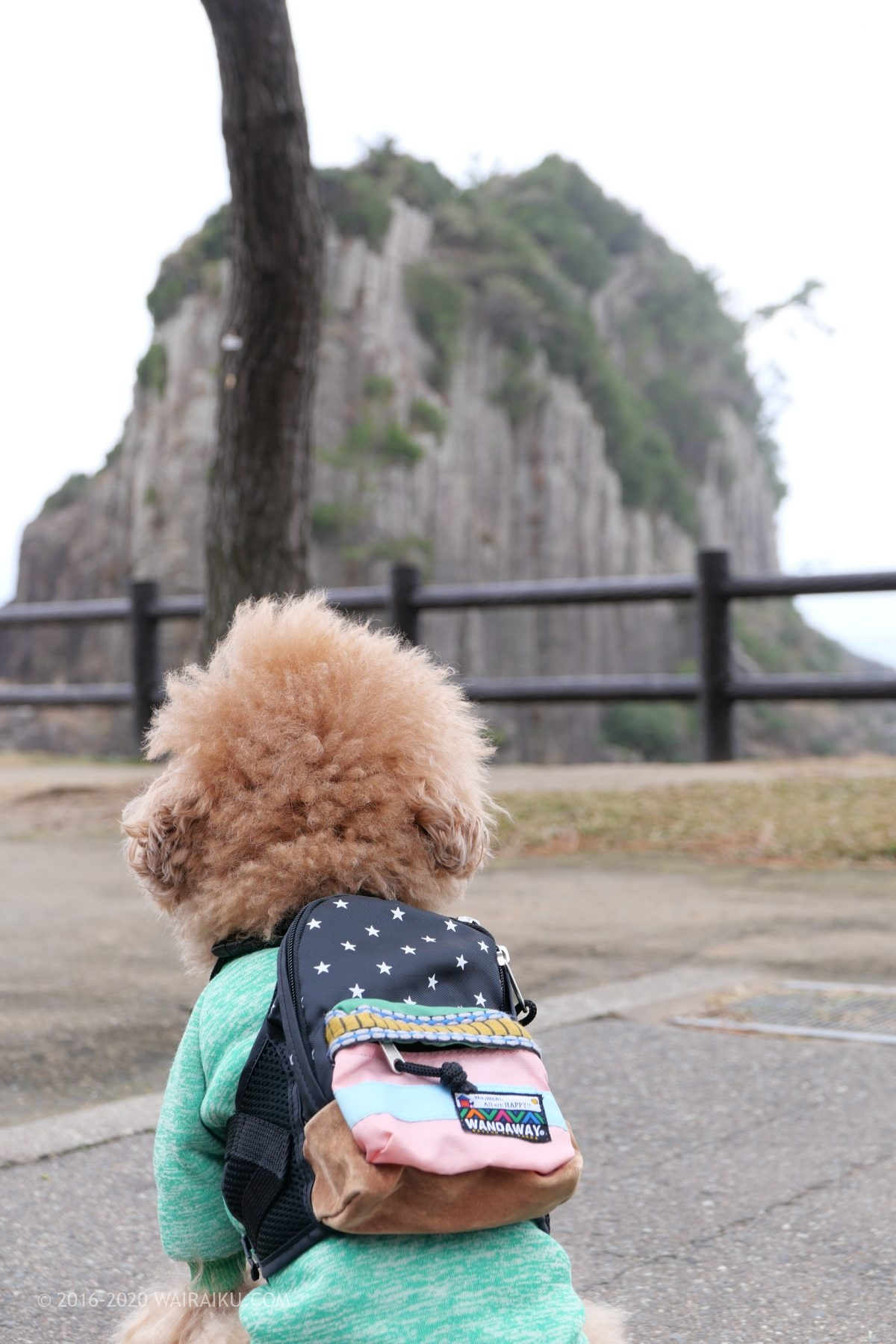 福井県 鉾島神社 犬連れ
