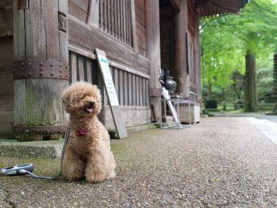 比叡山延暦寺 犬連れ