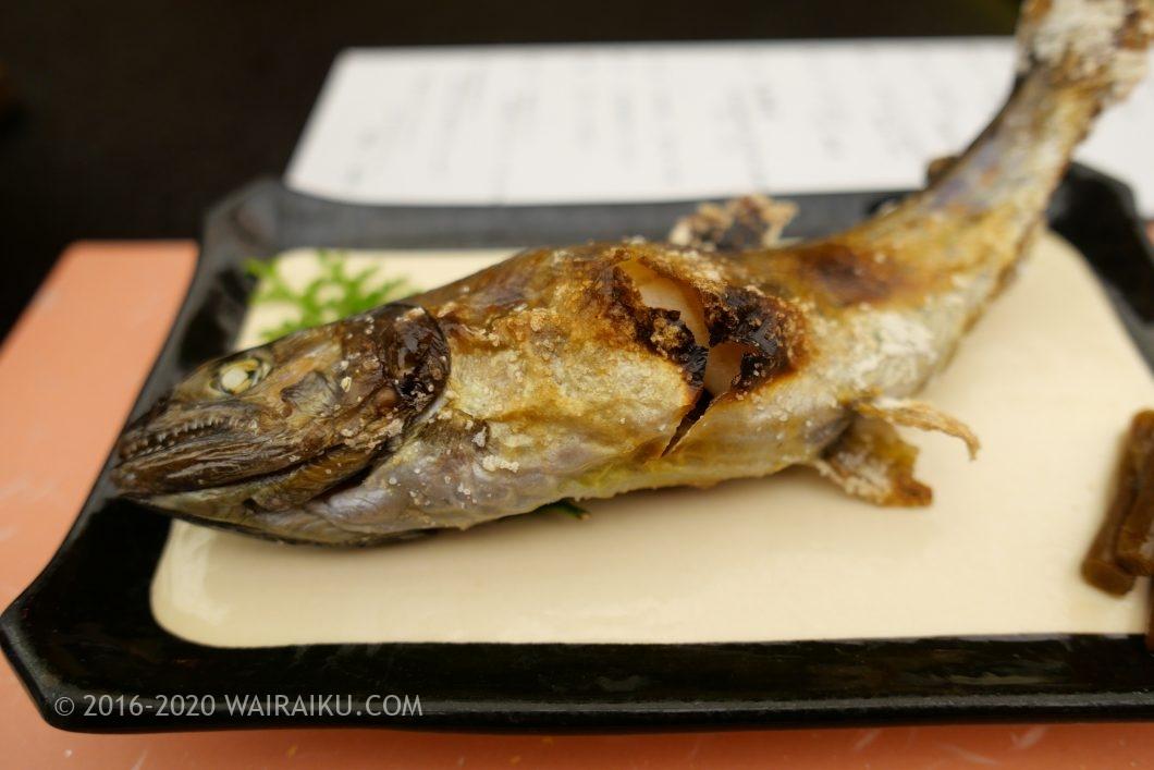 松阪わんわんパラダイス おひとり様 夕食