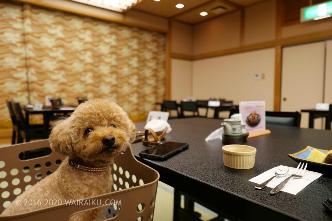 松阪わんわんパラダイス おひとり様 朝食