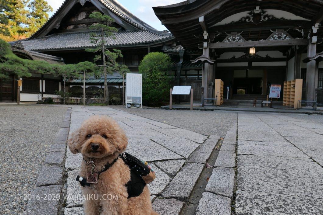 長谷寺 犬連れ