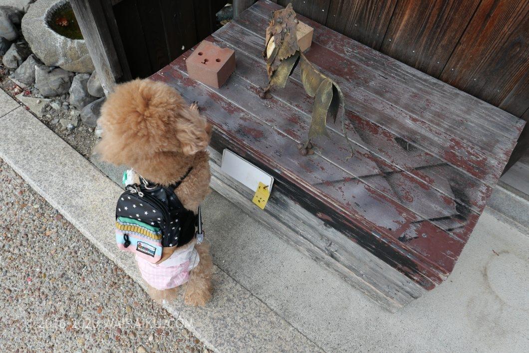 東海道関宿 犬