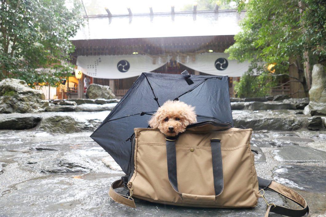 雨の椿大神社 犬連れ