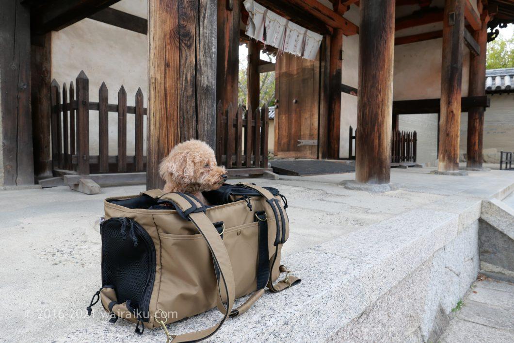 法隆寺 犬