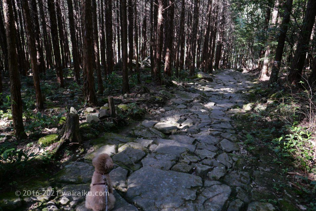 熊野古道 馬越峠 犬