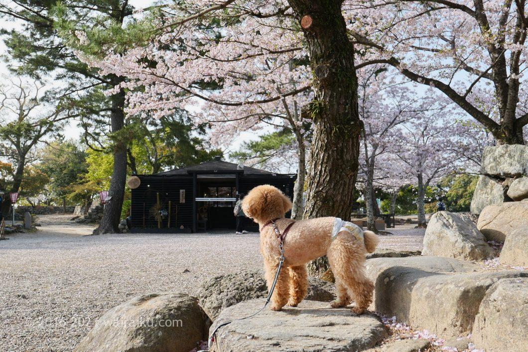 松阪城跡 ペット同伴