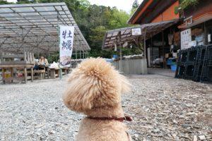 牡蠣食べ放題 ペット同伴可 山安水産パールロード店