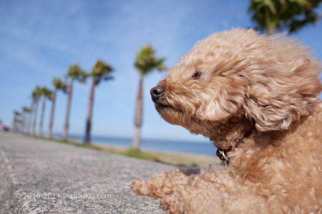 マリーナ河芸 犬