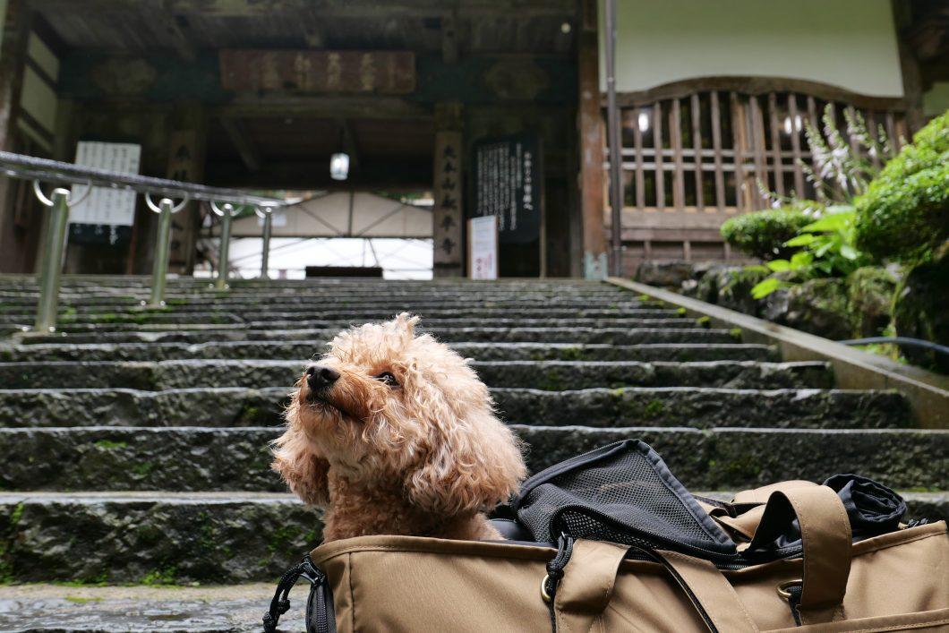 永平寺 犬連れ