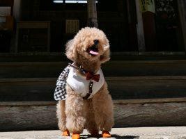 太江寺 犬連れ